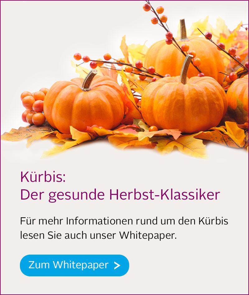 Banner kuerbis mobile-